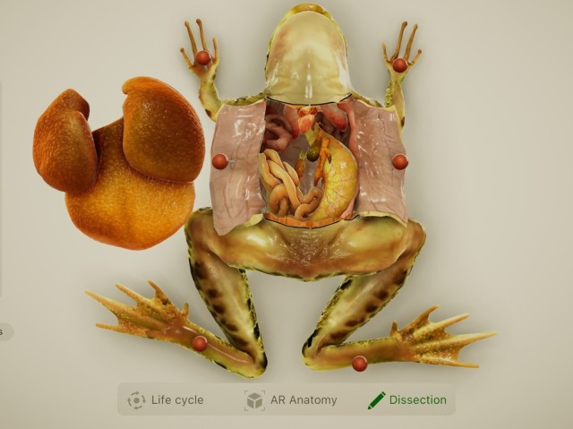AR Image from Froggipedia